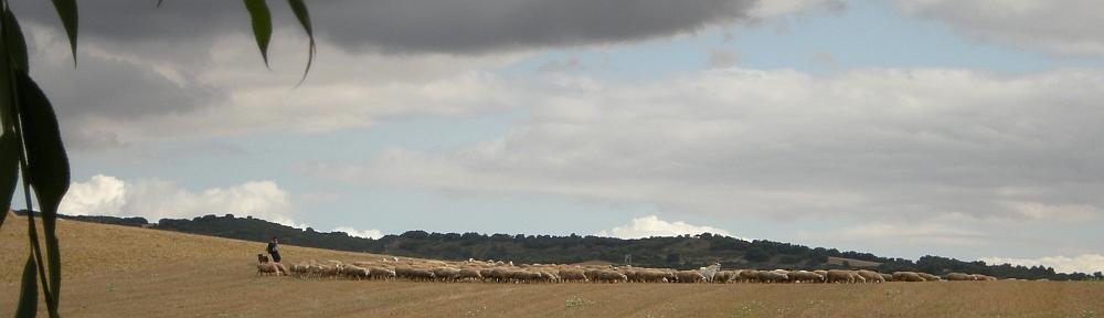 Herder & lucht 1 - 1000x288