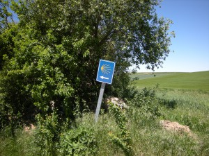 Camino wijzer Dscn2142